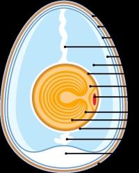 Eggs-3.jpg