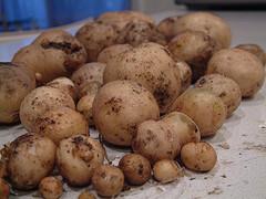 Potatoes - Cargo Handbook - the world's largest cargo