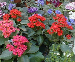Flowering Potted Plants Jpg
