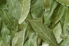 Bay leaves-1.jpg